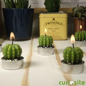 velas de cactus