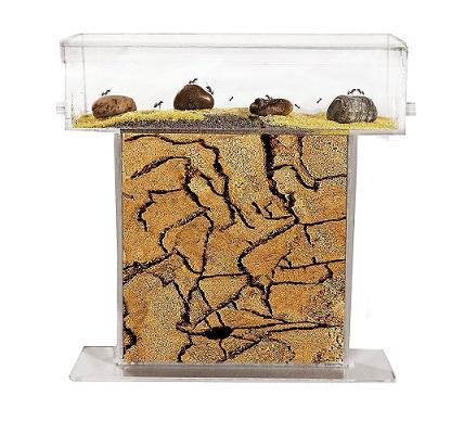 comprar hormiguero de arena con hormigas precio barato